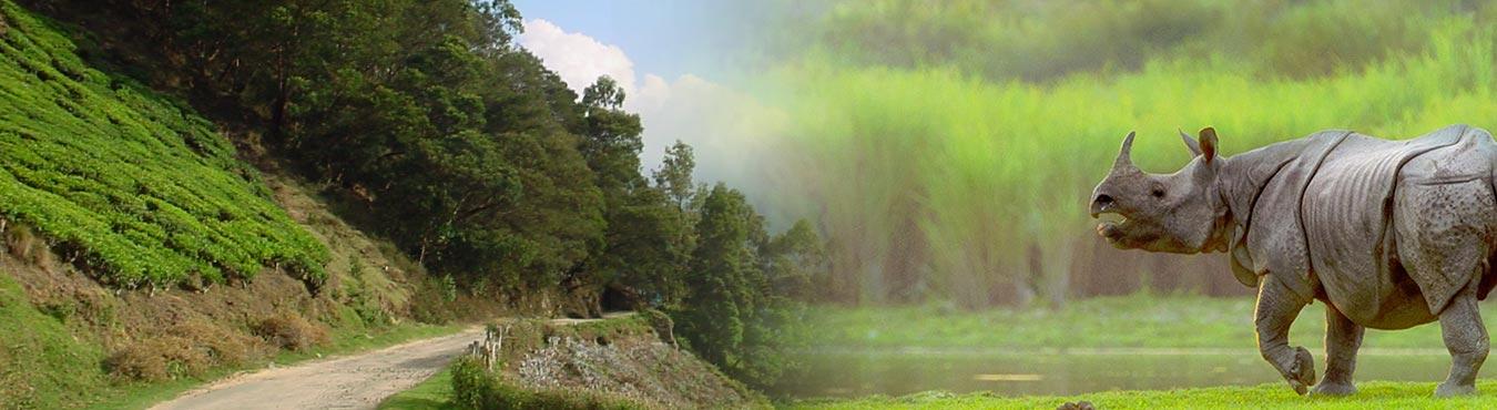 Rhinoland Assam Tour Package