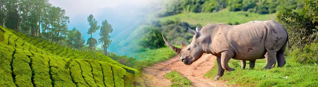 Rhinoland Tour Assam